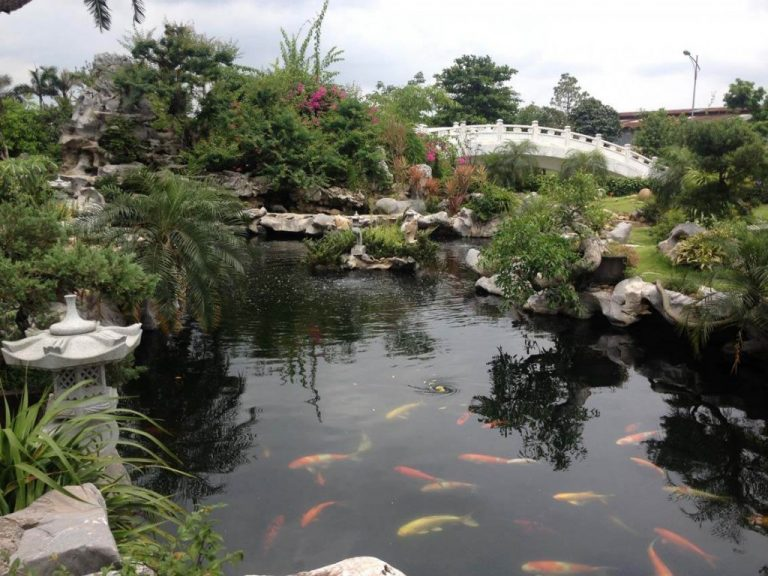 Hòn non bộ cũng được bố trí ở những không gian sân vườn rộng lớn có hồ nước, cá cảnh tạo không gian thiên nhiên mang tính thẩm mỹ một cách tự nhiên nhất.